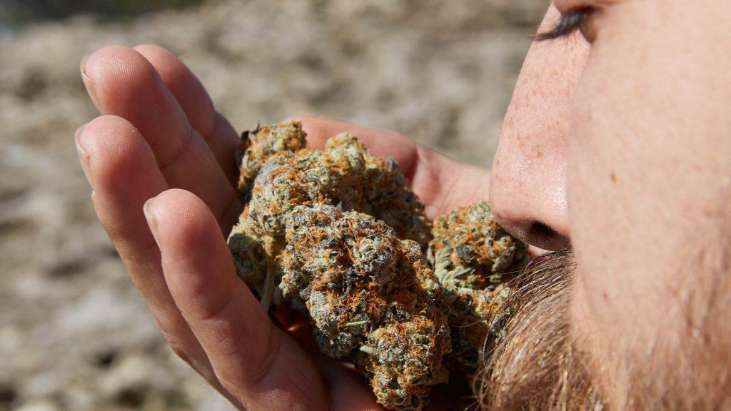 Reggie Weed - Taste
